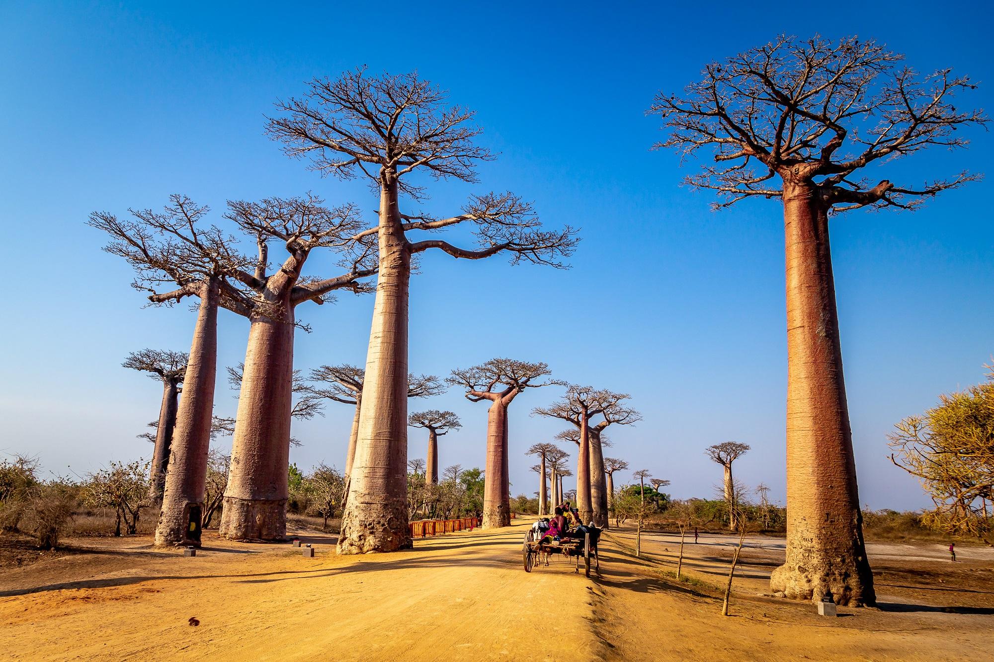 Voyage à Madagascar, séjours, Circuits et Autotours. Les Comptoirs du Monde, agence de voyage pour individuels et groupes